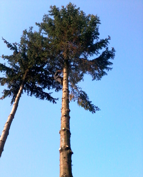 gardenluk-wycinka-drzew-01