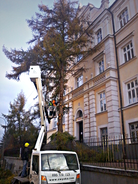 gardenluk-wycinka-drzew-13