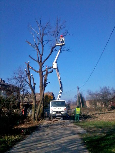 gardenluk-wycinka-drzew-15