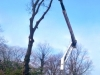 gardenluk-wycinka-drzew-02