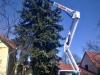 gardenluk-wycinka-drzew-04