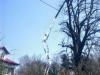 gardenluk-wycinka-drzew-05