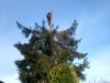 gardenluk-wycinka-drzew-09