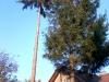 gardenluk-wycinka-drzew-10