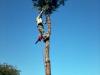 gardenluk-wycinka-drzew-11